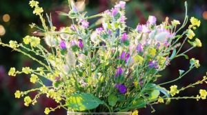 fiore-dellamicizia-di-campo-1280x720